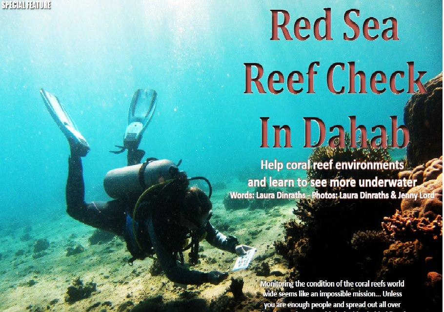 Red Sea Reef Check In Dahab