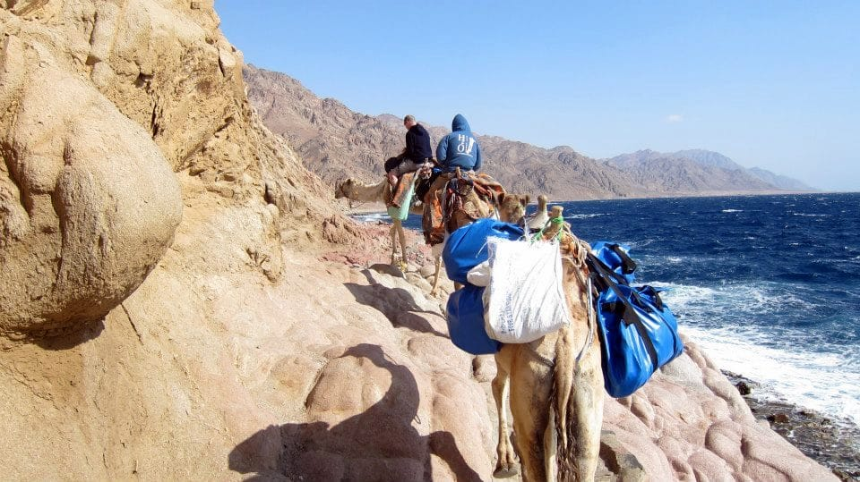Camel and Diving trip in Dahab