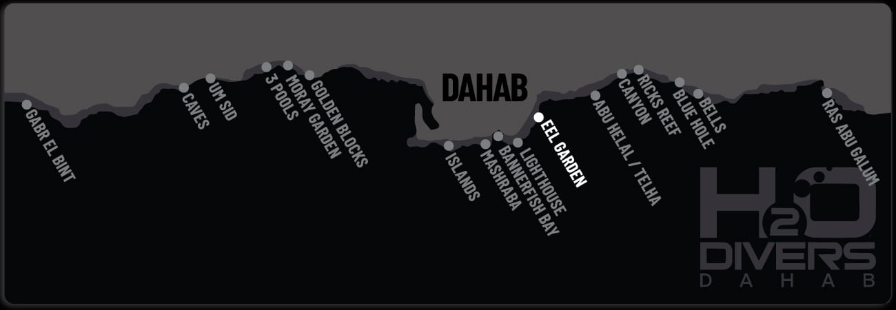 Dahab Dive Sites - Eel Garden
