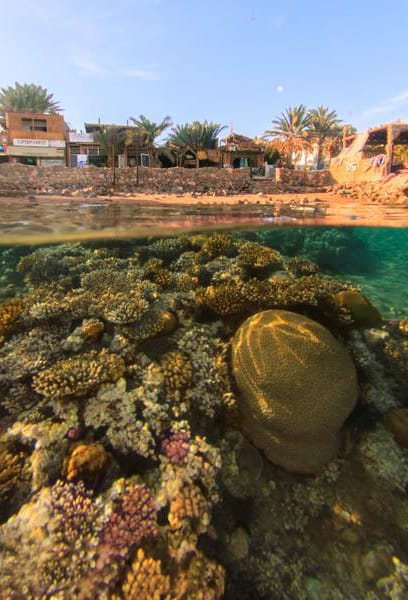 H2O Divers Dahab house reef, Bannerfish Bay