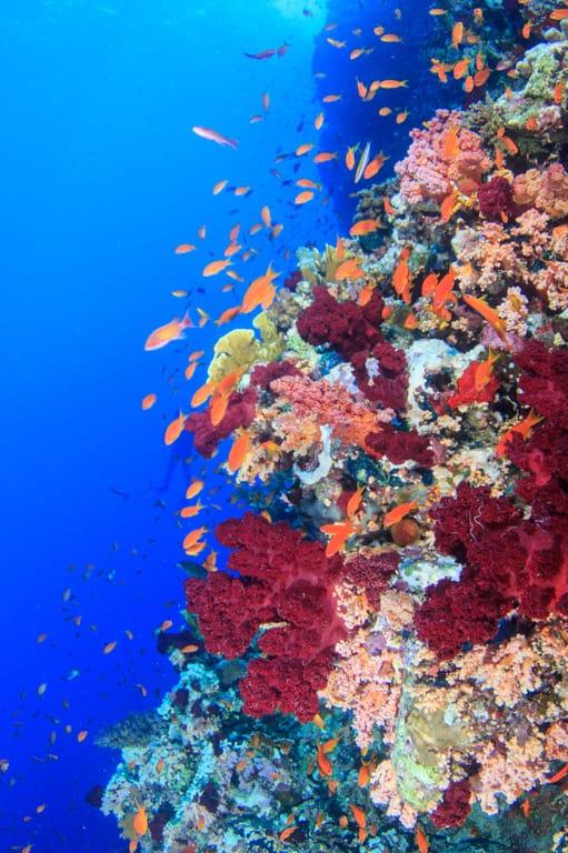 Blue Hole Dahab reef wall