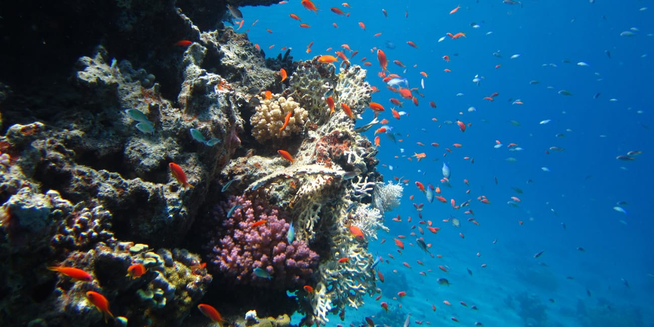 Eel Garden dive with H2O Divers Dahab