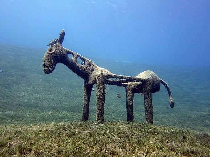 Donkey Underwater sculpture, Dahab