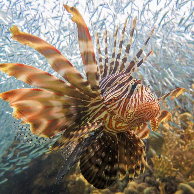Dahab Ricks Reef