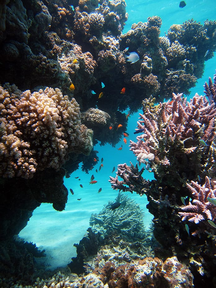 Reef near Dahab (RAG)