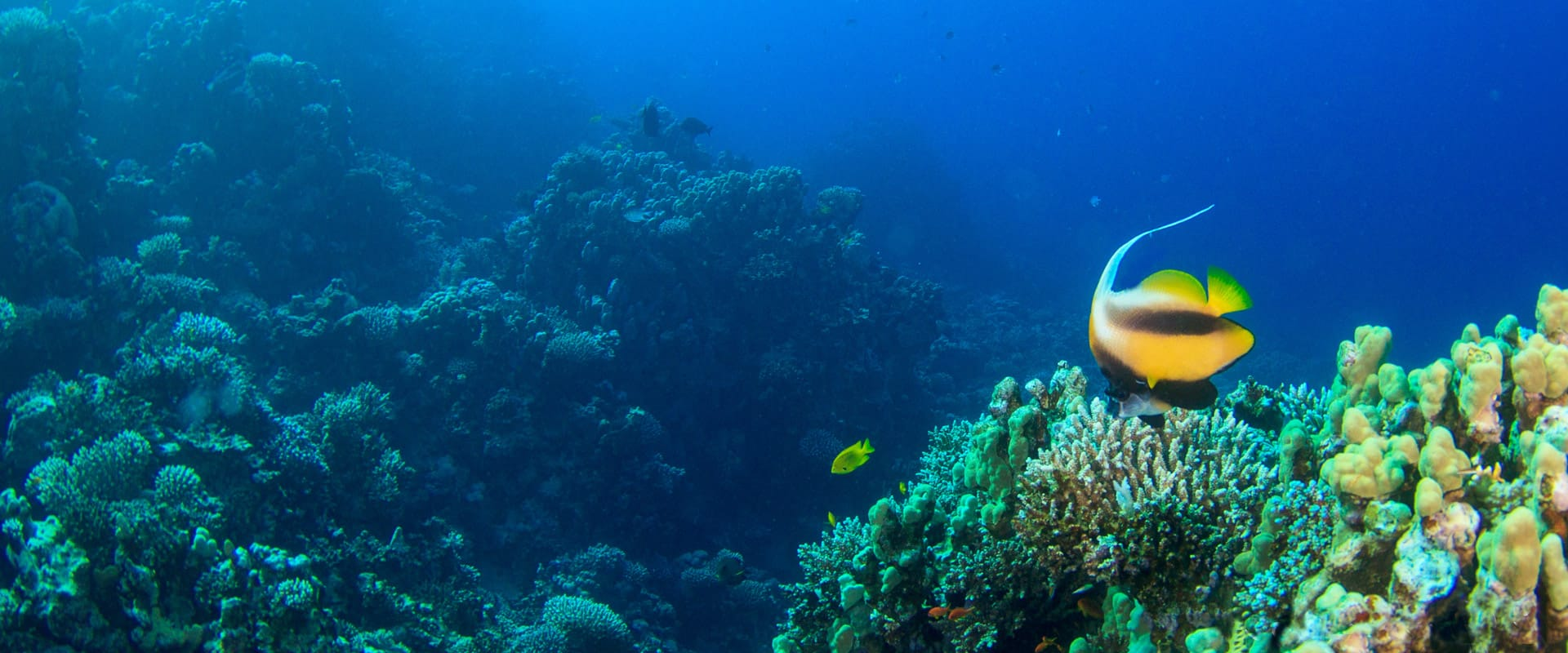 Diving the best Dahab Dive Sites with H2O Divers